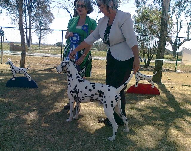 Best Neuter in Dalmatian Show 2013