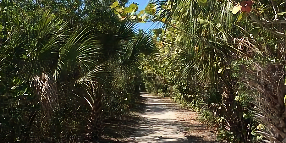Black Island Trail at Lover's Key State Park
