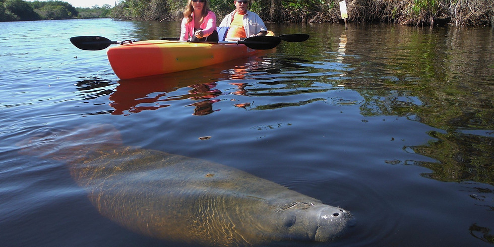 Kayak with the Manatees (Saturday outing)