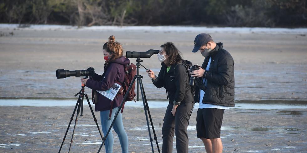 Shorebirds! at Bunche Beach