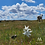 Thumbnail: Parcelas Reserva Aliwen II