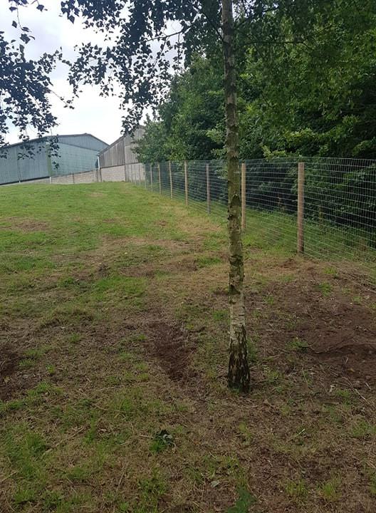 6 foot fence.jpg