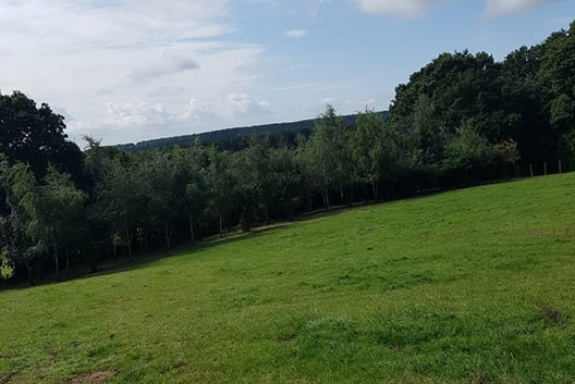 slope to woods.jpg