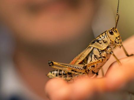 Are you a grasshopper?