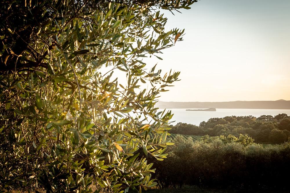 I terreni A1980 sullo sfondo del lago di Bolsena