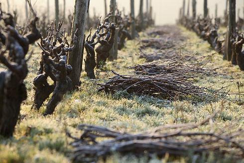 340_Vignes_en_hiver_Stevens_Frémont.jpg