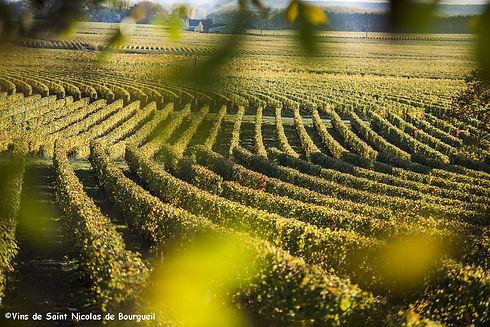 Vignoble de Saint Nicolas de Bourgueil.j