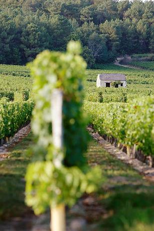 Maison-de-vigne-Stevens-Frémont-683x1024