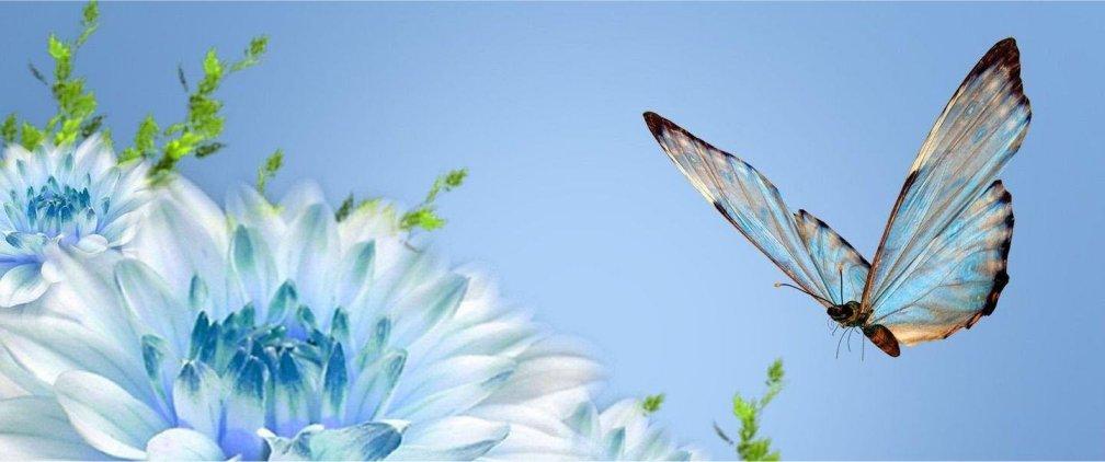 farfalle3a