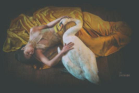 sleep_missjack_swan.jpg