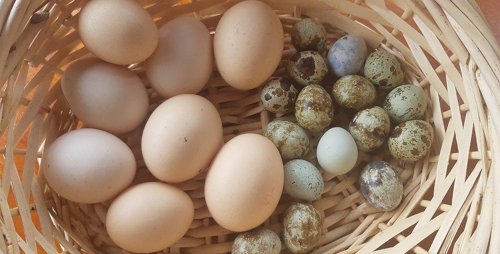 Eggs - half a dozen