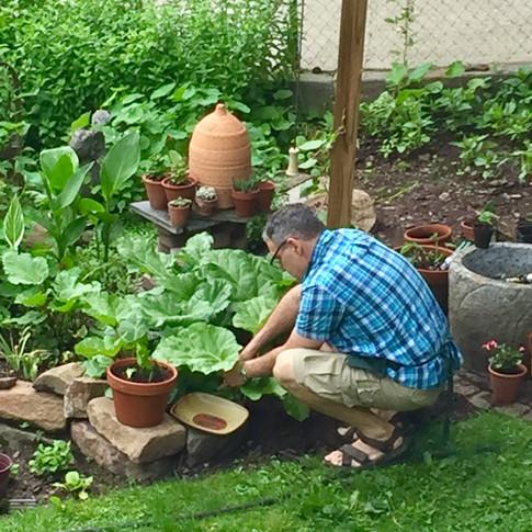Michael picking herbs