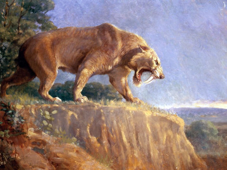 Saber-Toothed Tigers & Weapons Ghosts Recognize