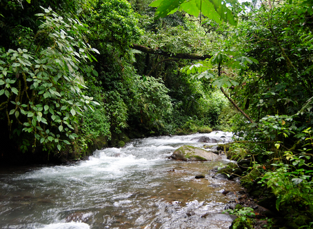 Traveling Through a Central American Rainforest