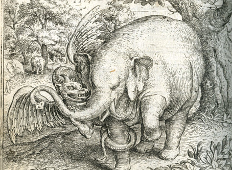 Pliny: Elephants vs. Dragons