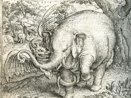 Pliny: Elephants vs. Dragons