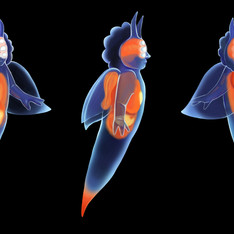 Sea Angel Concept Art, Photoshop, 2021