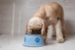 Dog Eating Dog Food