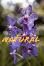 Natural Image.jpg