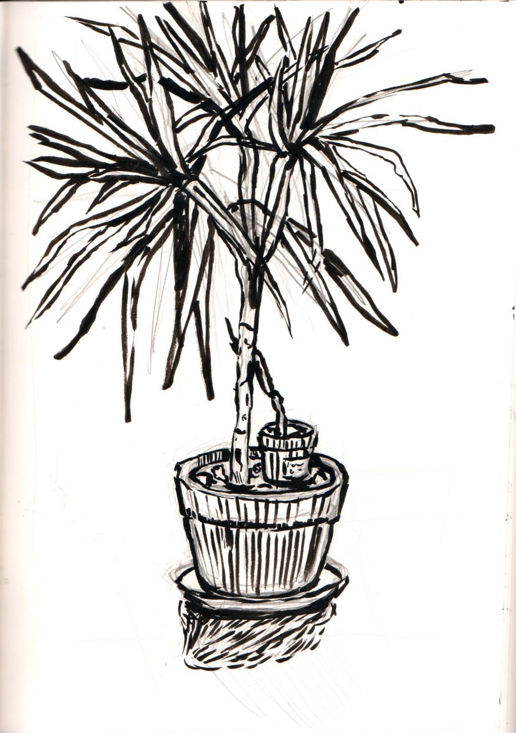 Plant Study - 1