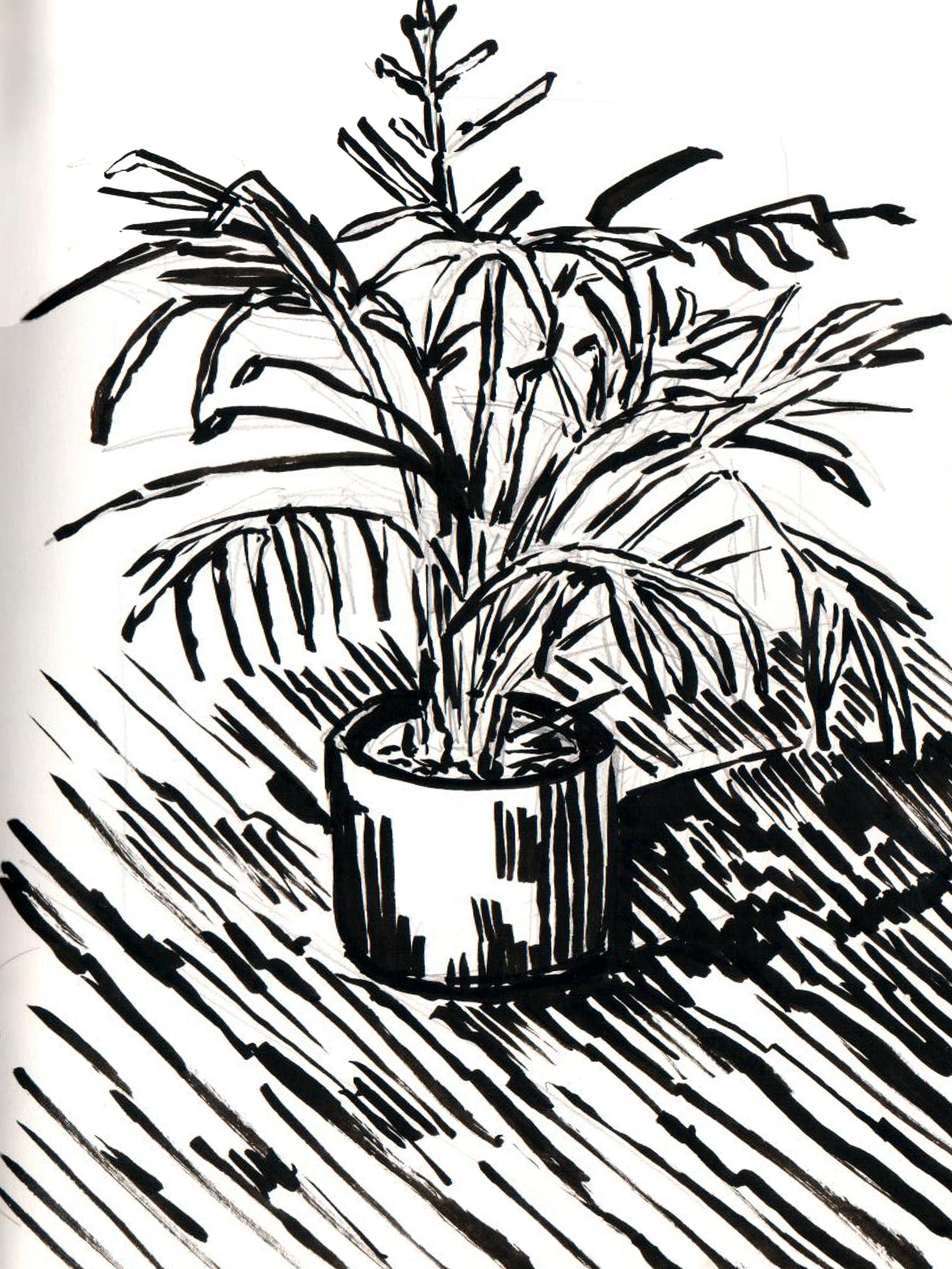 Plant Study - 2
