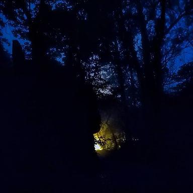 O contraste das árvores em caminhada noc