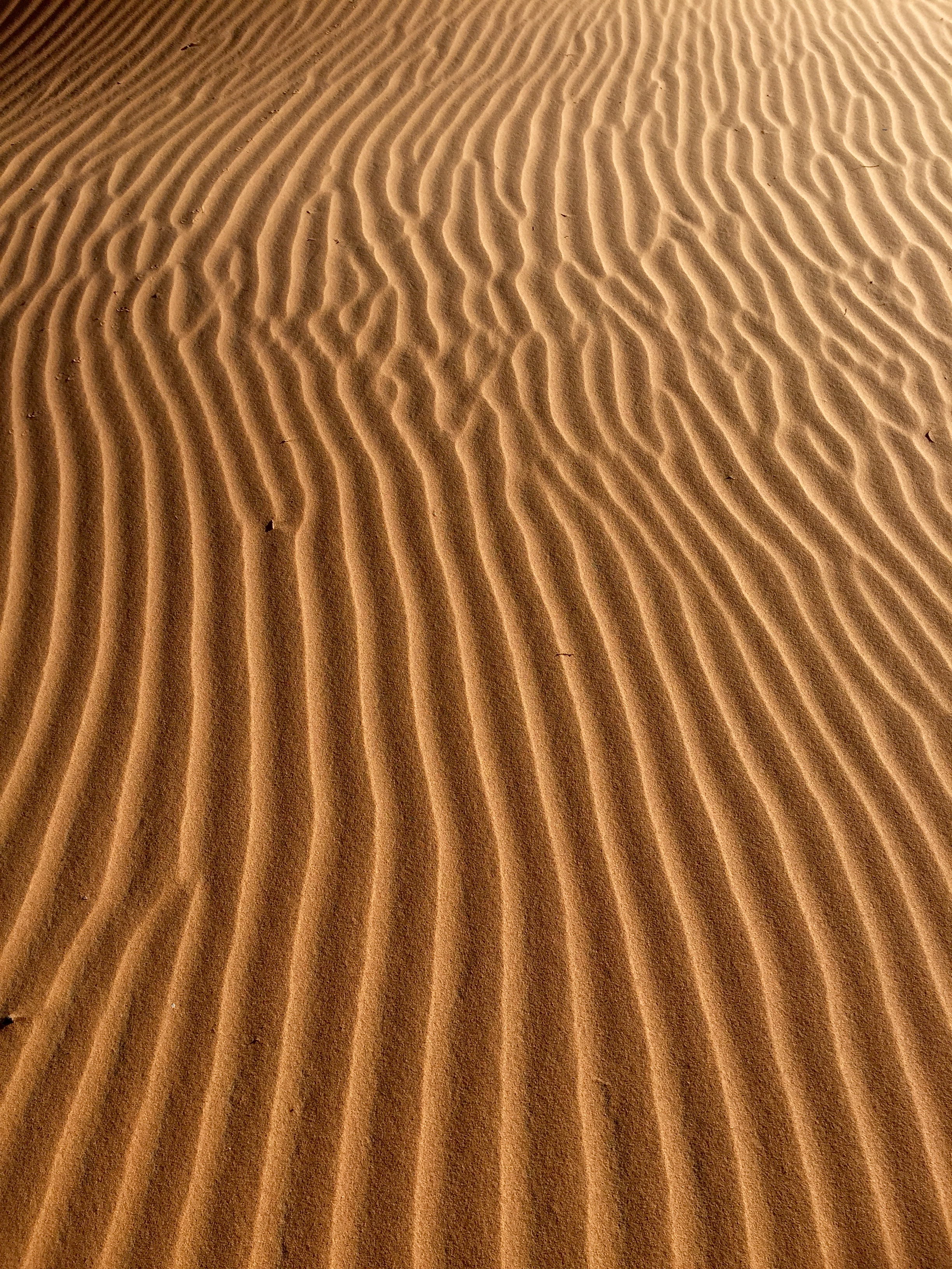 Erg Chebbi/The Sahara, Morocco
