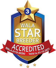 Mountain Sun Accredited Star Logo Final.