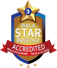 Mountain Sun Accredited Star Logo Final.
