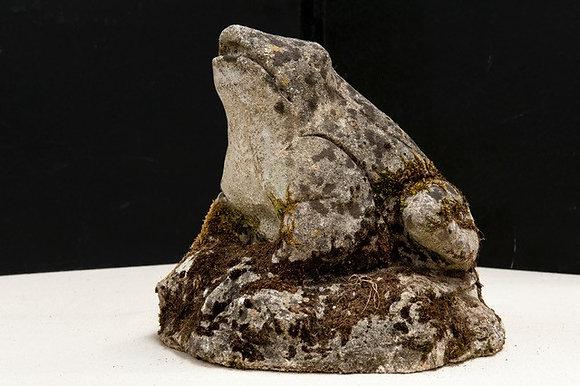 Large Stone Frog