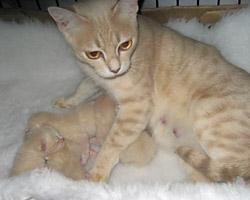 Brigita_kittens1