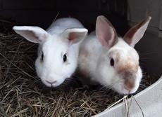 Bunnies, Cloudy and Burpee