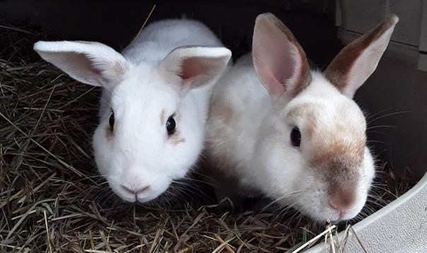 Our bunnies, Cloudy & Burpee