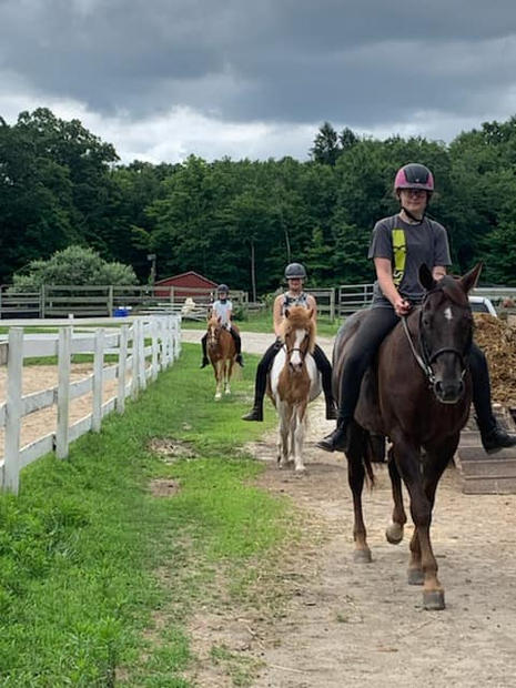 Some of our program horses