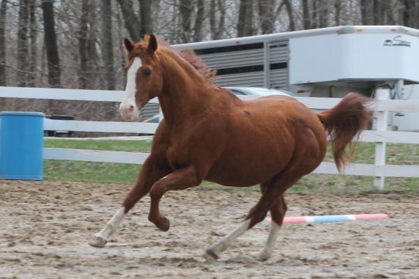 George, a Quarter Horse gelding