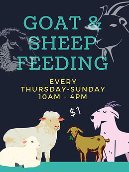 Goat & Sheep Feeding.jpg