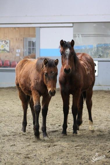 Baby Raisin and Ocho.jpg