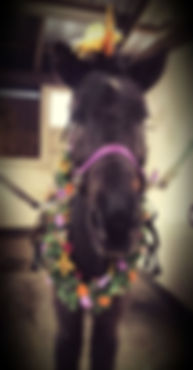 Unicorn_Naggur.jpg
