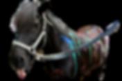 Horse Camp_Naggur.webp