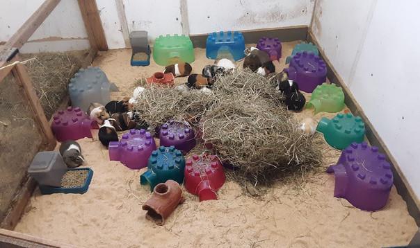 Our guinea pig room