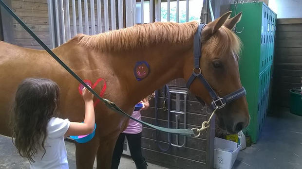 Madeline, a Connemara Pony mare