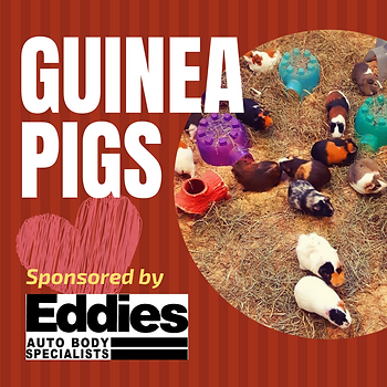 Guinea Pigs.png