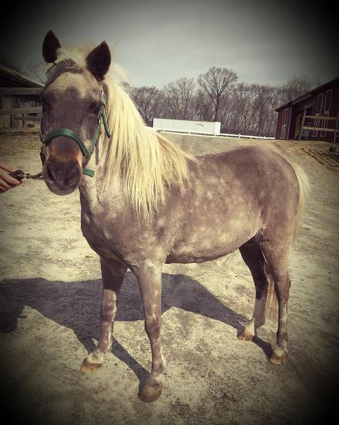 Morningstar, a little Pony mare