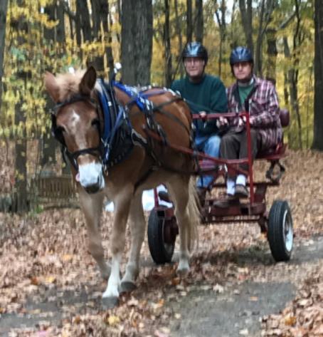 Sandy the Mule