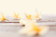 yellow petal.jpg