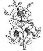 flower_12.jpg