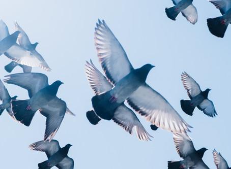 For The Birds: Finish The Song Lyrics