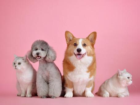 Projeto de Lei quer proteger animais de maus tratos nos condomínios