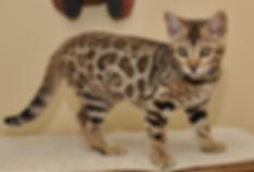 reserve a kitten