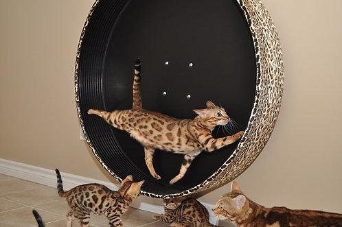 Roue à chats murale